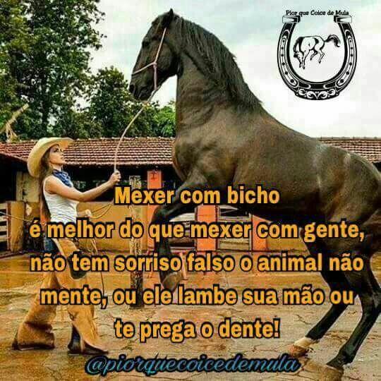Seguraaaa Peãooo Frases De Cavalo Frases De Peão E