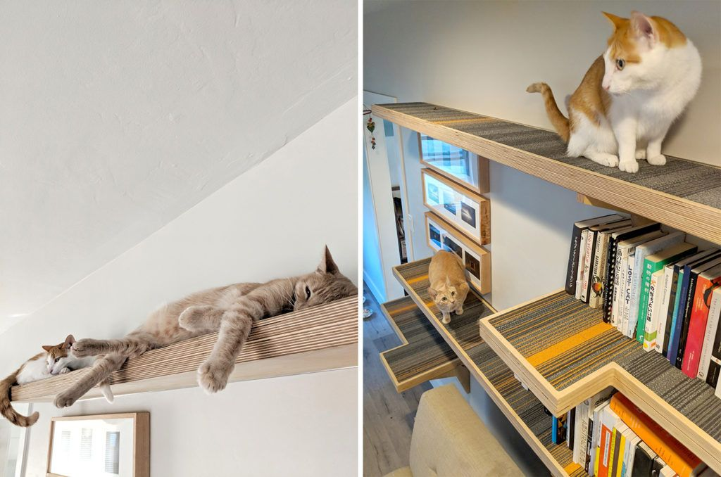 Cat Library Custom Cat Climbing Shelves, Great