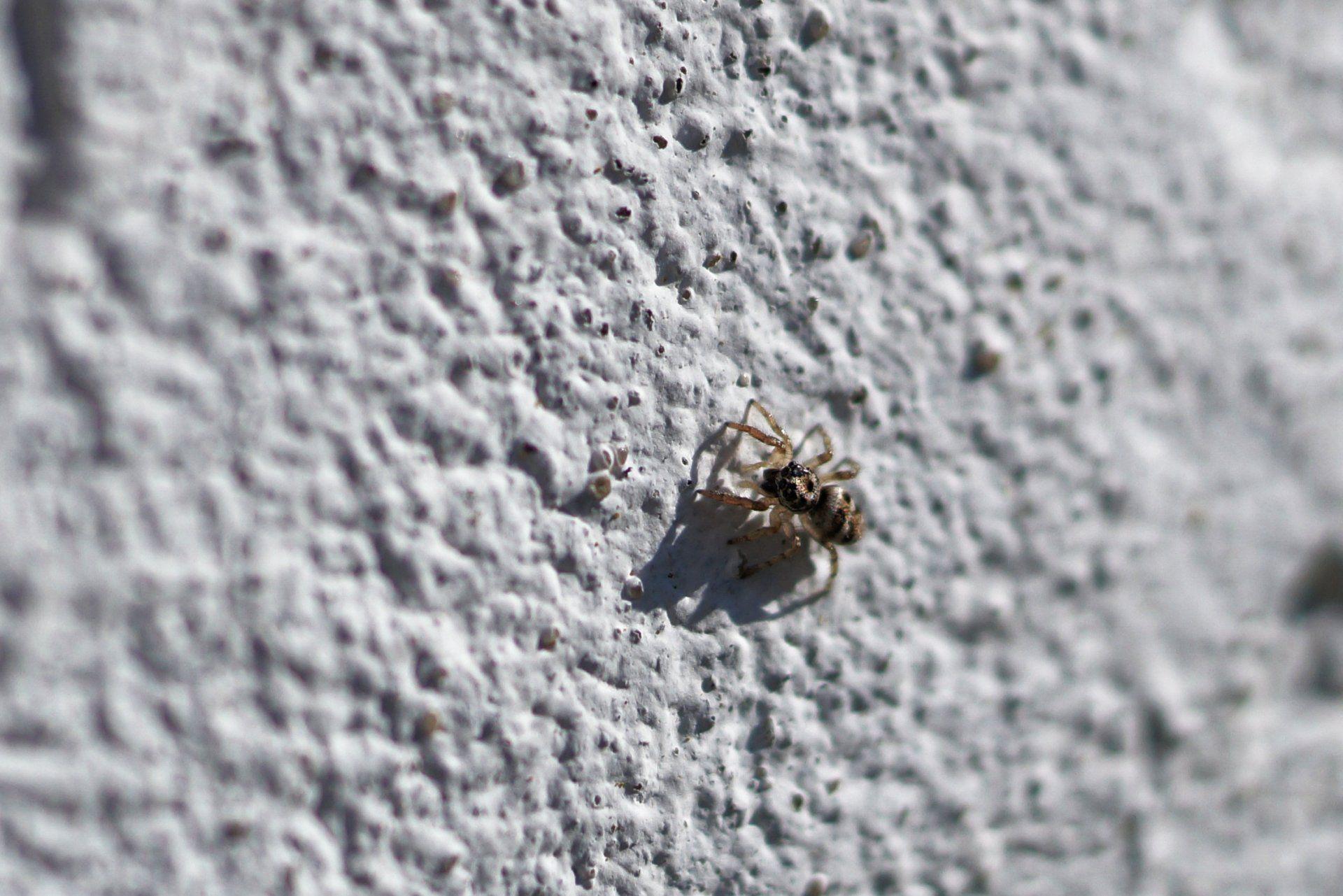 Mini Spinne In Nahaufnahme Nahaufnahmen Insekten Bilder Tiere