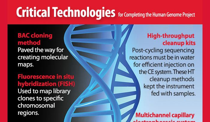 Amazing facts about the way that the Human Genome Project can - animal specialist sample resume