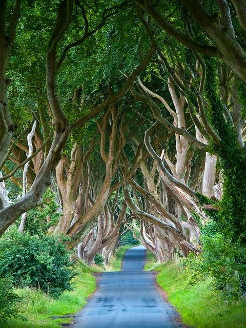 Known as the Dark Hedges, and the Armoy Trees on Bregagh Road. Hall of the Fairy King
