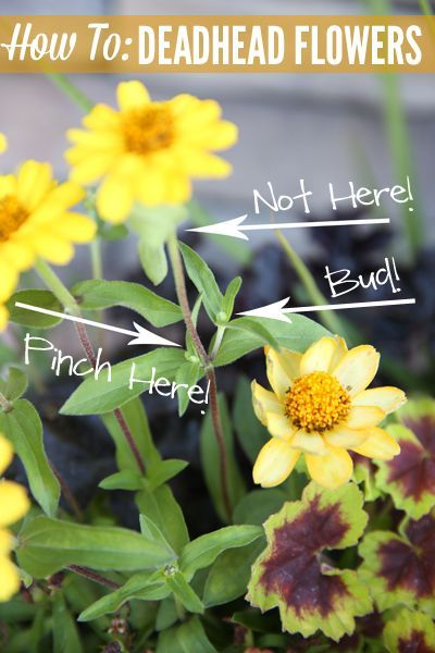 How To Create A Container Planting Deadheading Flowers Container Plants Container Flowers