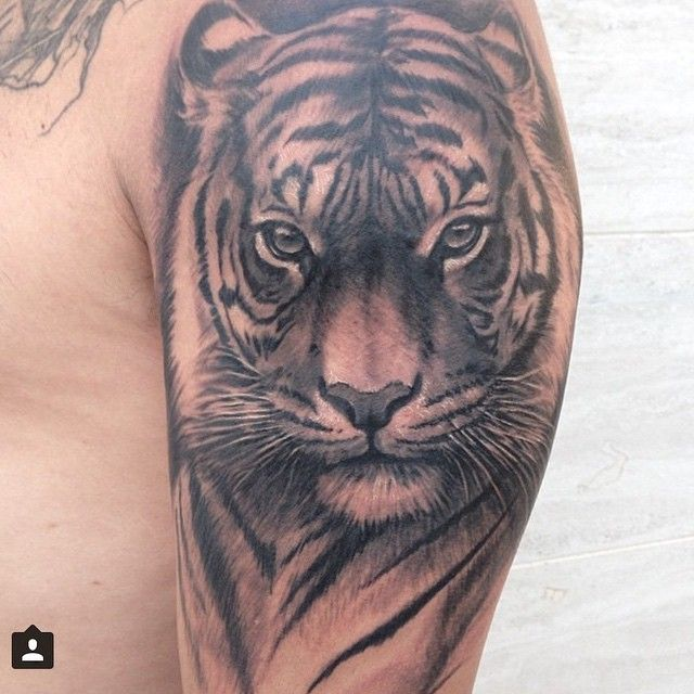 Image Result For Image Result For Lion Tattoo Neo Trad