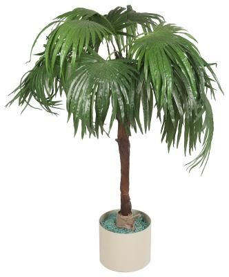 How To Repot A Majesty Palm Plant Gardening Potted
