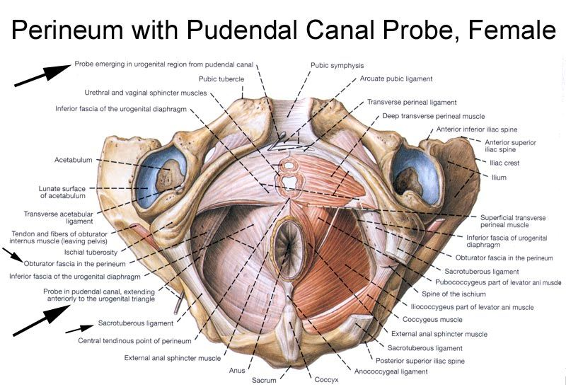 Pudendal Neuralgia Natural Treatment