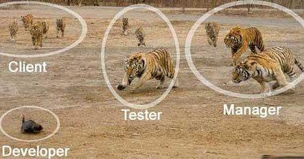 Poor Developer! #Android #iOS #programmer #coder # code #apple