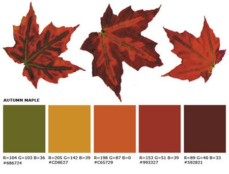 Fall Color Schemes Glamorous Fall Color Pallet  Autumn Color Palette Color Palettes Fall Review