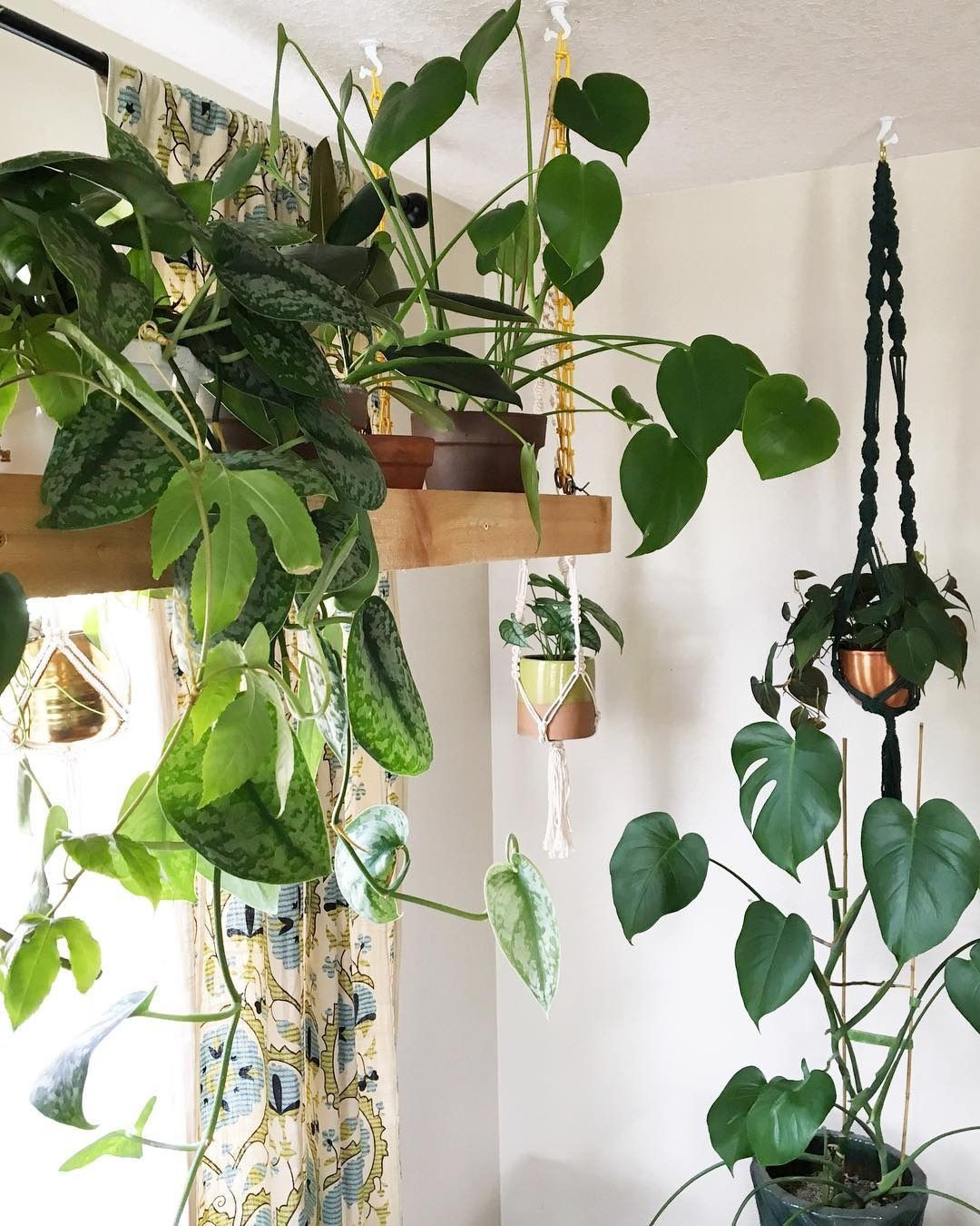 Hängepflanzen Zimmer 27 plantlady instagram accounts to follow rn