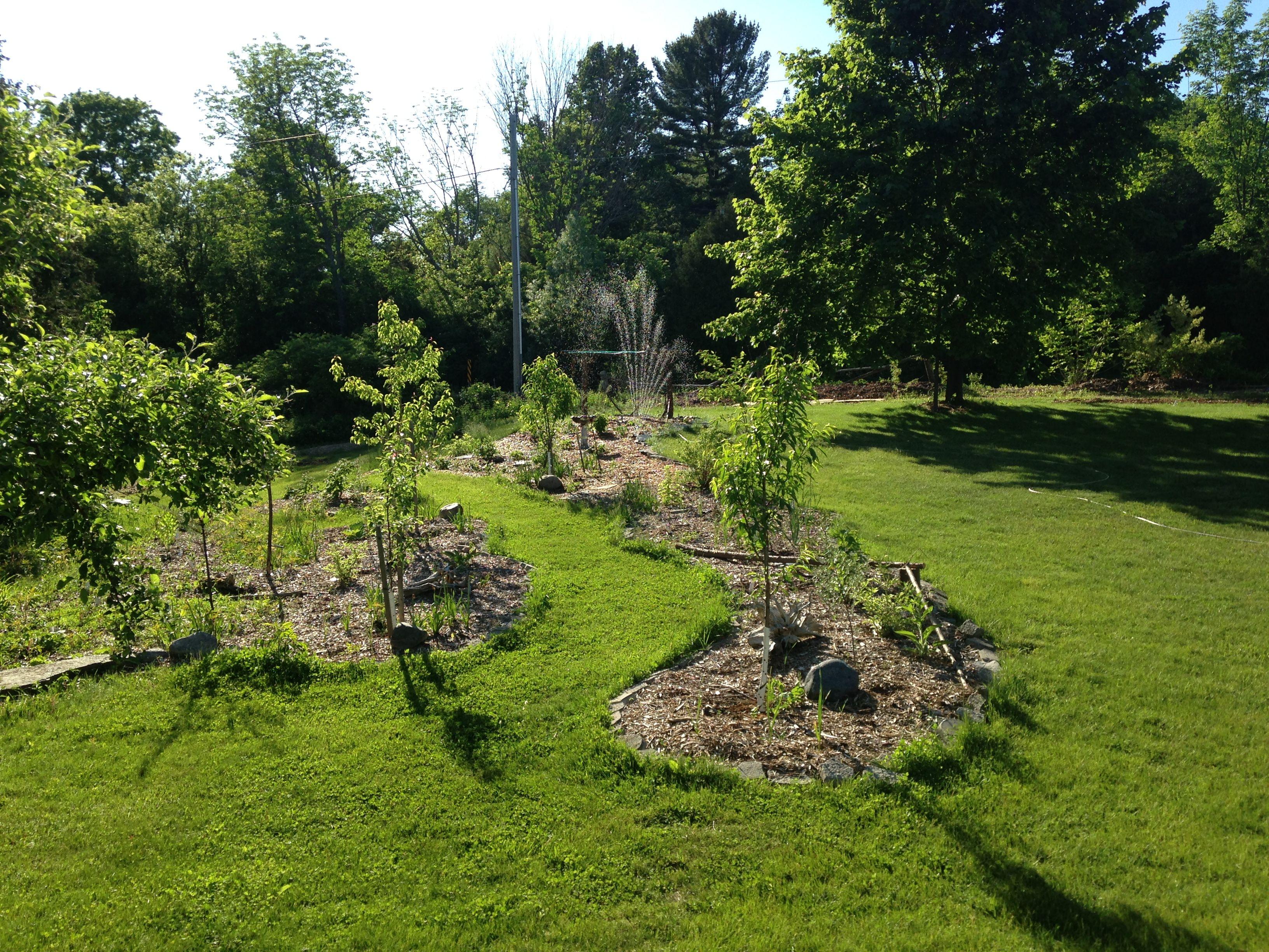 Food forest garden update june 2 2018 ontario canada