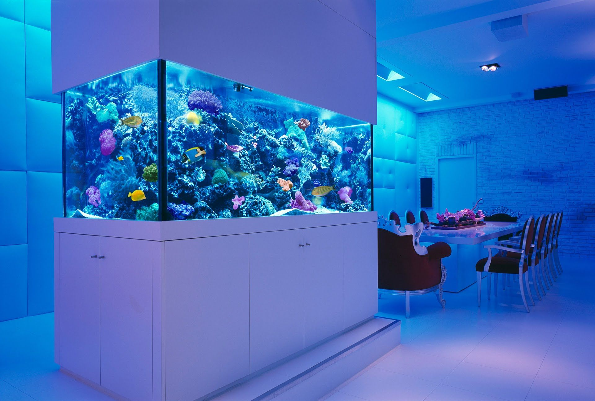 Nothing beats a good looking Aquarium! Check out the benefits to #rent an #aquarium