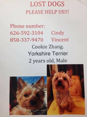 Lost Dog Yorkshire Terrier Yorkie Male Rewards 1000 Thorndale Rd At Rosemead Blvd A Male Yorkshire Terrier Losing A Dog Yorkshire Terrier 2 Years Old