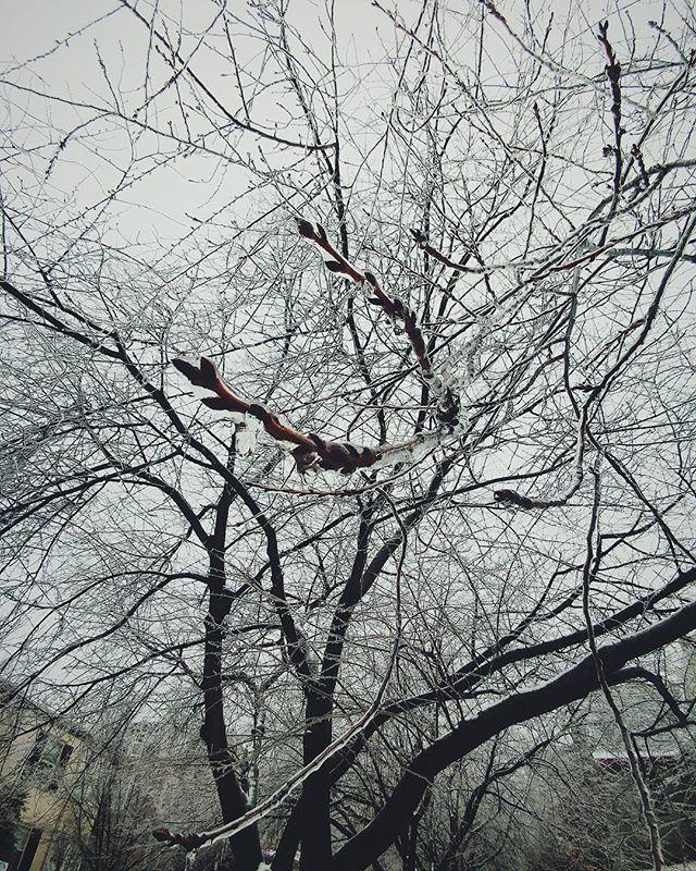Winter Wonderland. #philadelphia2016 #philadelphia #eastcoast #northeastcreatives #thepeoplescreatives #liveauthentic #livefolk #thatsdarling #darlingweekend #vsco #vscocam #vscoonly #vscogood #vsconature #vscoartist #vscogrid #vscophile #winter #ice #winterwonderland #chestnuthill