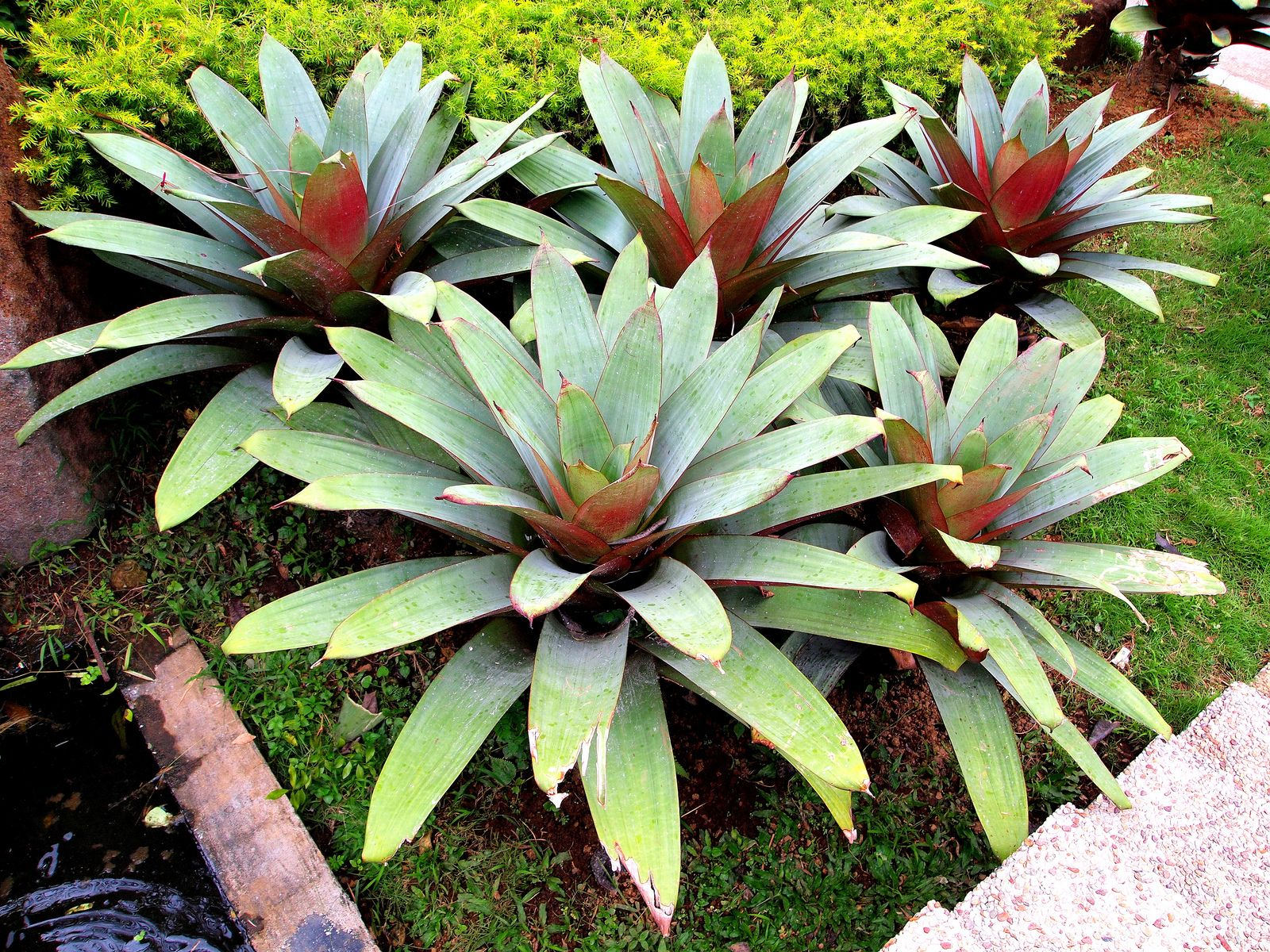 Eyecatching plant Plants, Air plants and Cacti