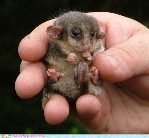 Handheld Long Tailed Super Squee Cute Animals Cute Baby Animals Cute Animal Pictures