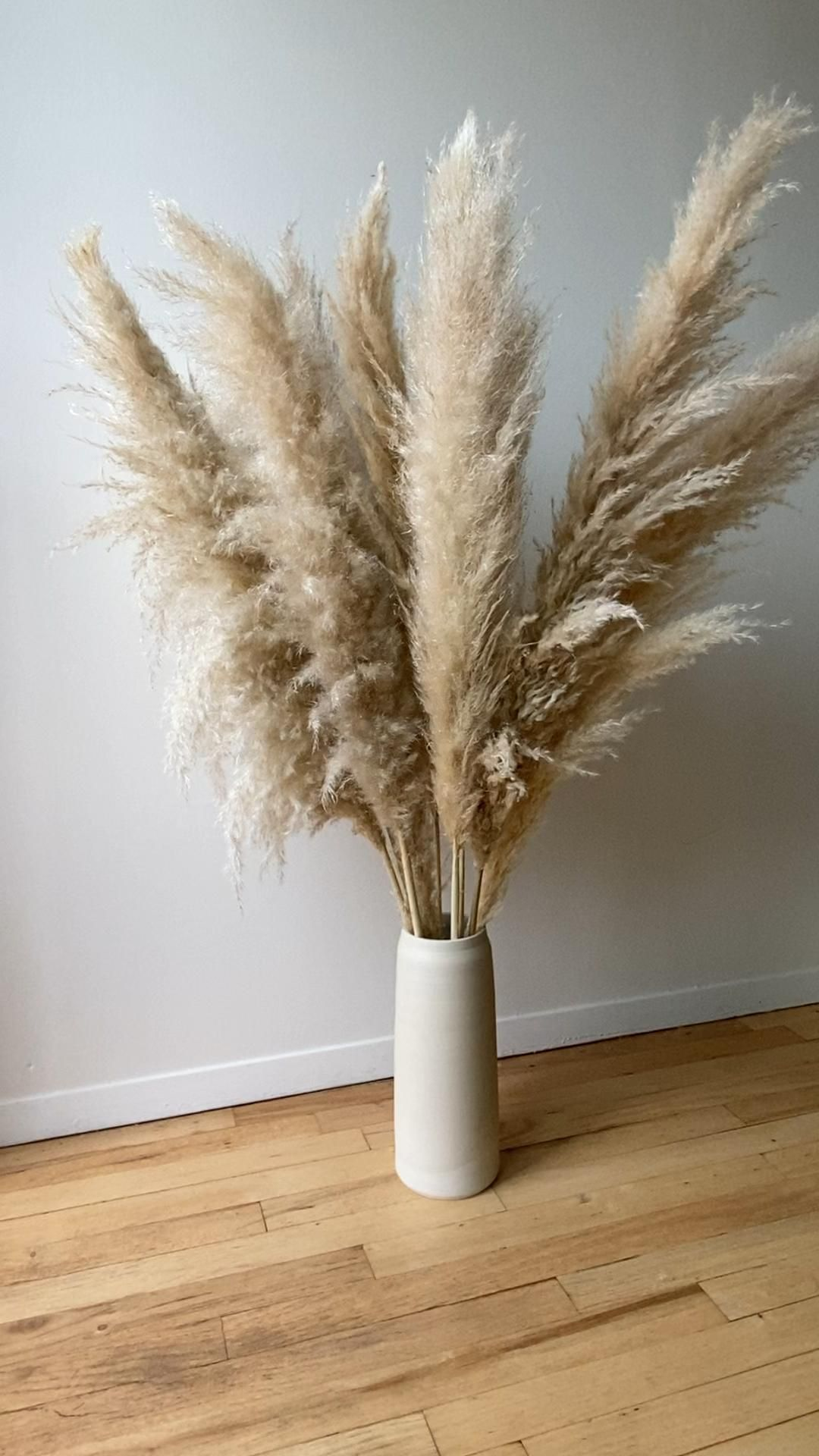 The best pampas grass For Love Of Pampas
