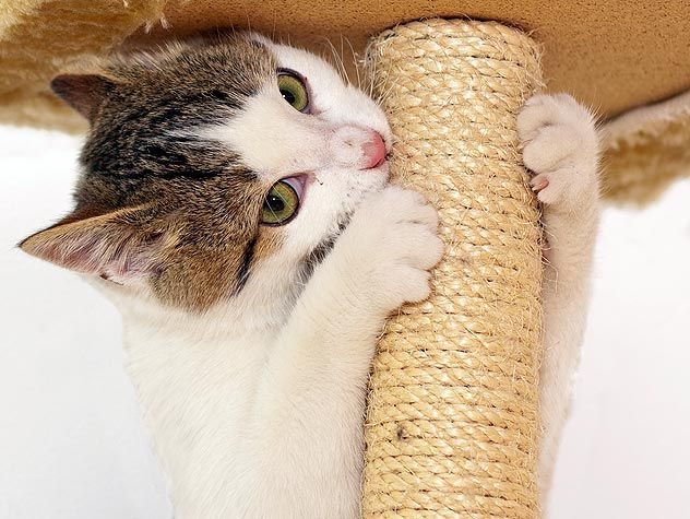 How To Choose A Scratching Post For Your Cat Petfinder Cat Scratching Post Scratching Post Diy Cat Scratcher