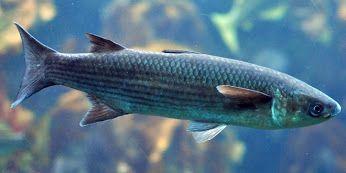 Pike Fishing – Komunita – Google+