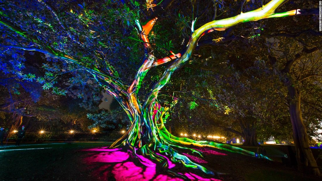 Green Bay Garden Of Lights Nature And Technology Entwine On This Moreton Bay Fig Tree At The