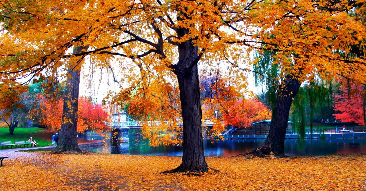 7 Best Cities For Seeing Fall Foliage Boston Public Garden