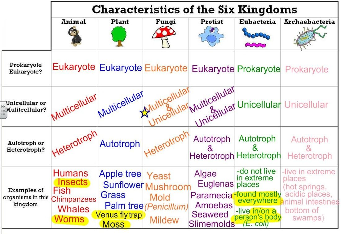 THE SIX KINGDOMS. ThingLink Teaching biology, Biology