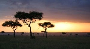 Today I'd go ... to Kenya