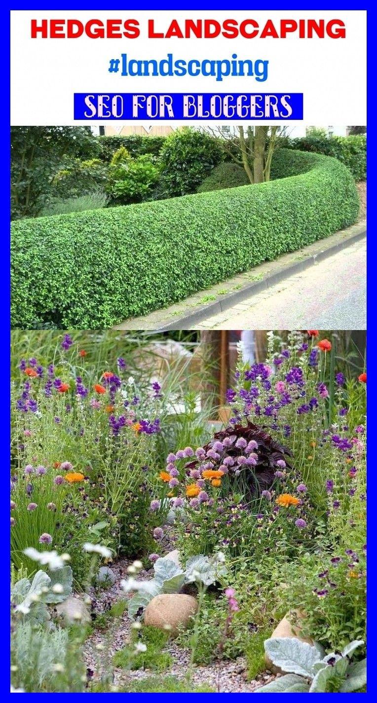 Hedges landscaping landscaping blog seo gardens