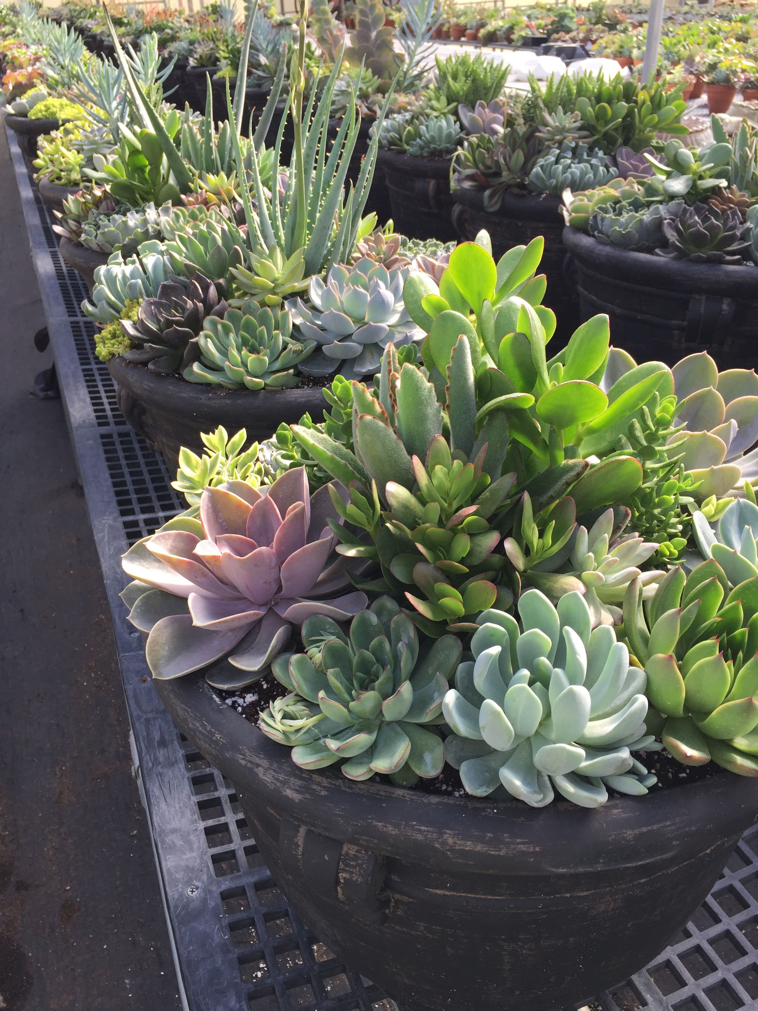 Succulent Pots From Popes Plant Farm