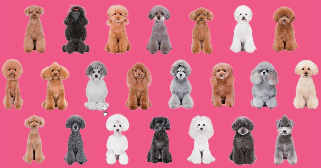 Pin By Jess S On Dog Grooming Looks Styles Japanese Dog Grooming Dog Grooming Poodle Dog Grooming
