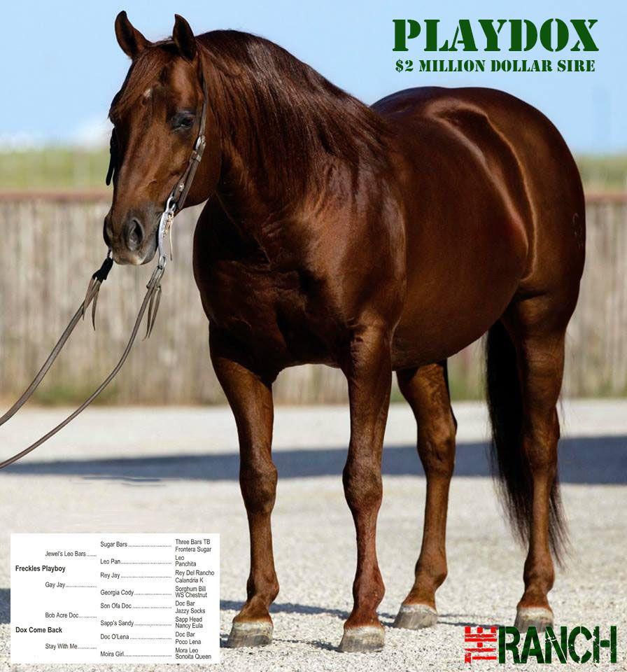 Playdox Playdox Reining horses, Horses, Chestnut horse