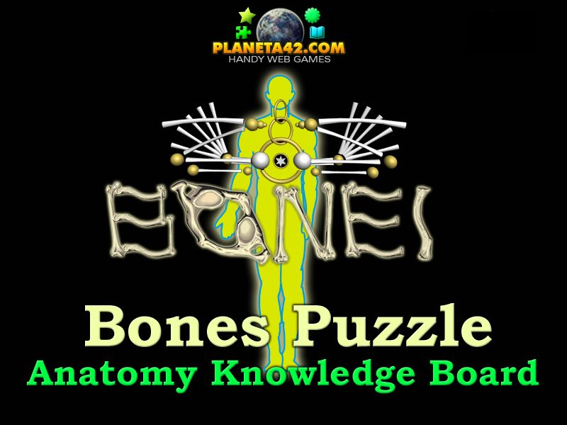 Bones Puzzle: Interactive Knowledge Board, used to explore the Human ...