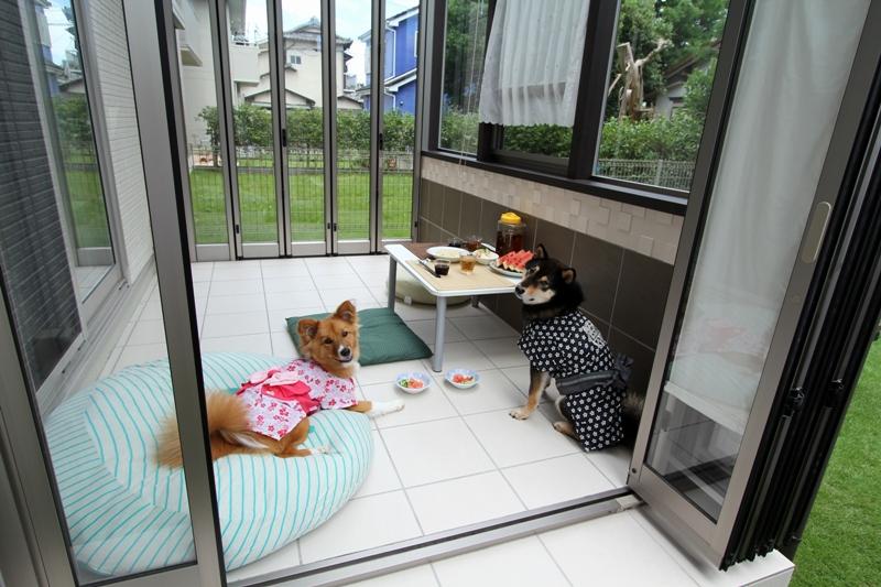 愛犬と寛ぐためのココマ リトルグローヴ 相模原市 ガーデンルーム 施工専門店 ミックス犬 犬のスペース ペットと暮らすインテリア