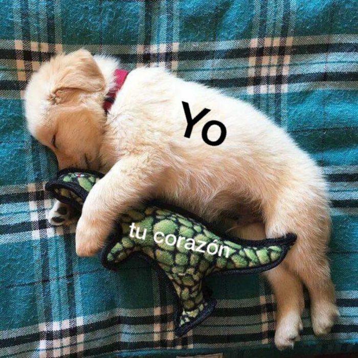 20 Imágenes de perritos que mejorarán tu mañana, tu día y ¡TU VIDA!