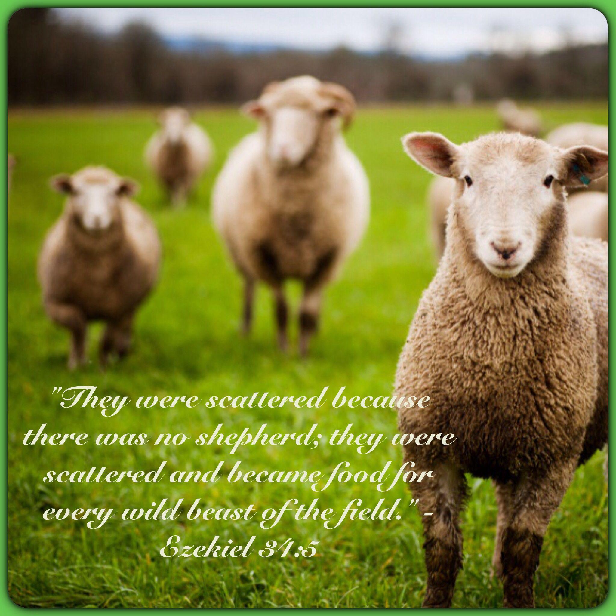 The Bible often describe sheep as responsive, unaggressive