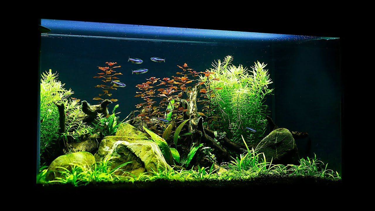 Charming Non CO2 Budget Aquascape   Maintenance And Update