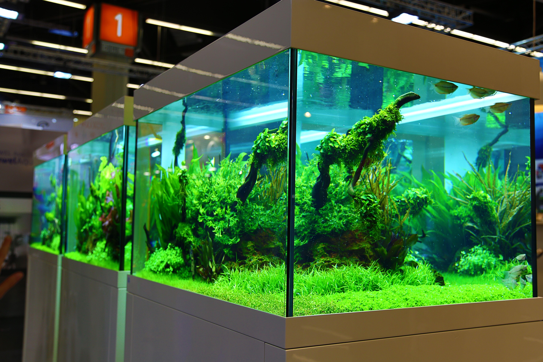 Fish Tank software
