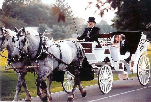 Horse And Carriage Wedding Photo This Vis A Drawn
