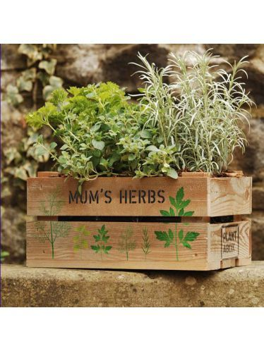 Mum S Herbs Gift Crate Rustic Pine Herb Gifts Crate Herbs Gift Crates