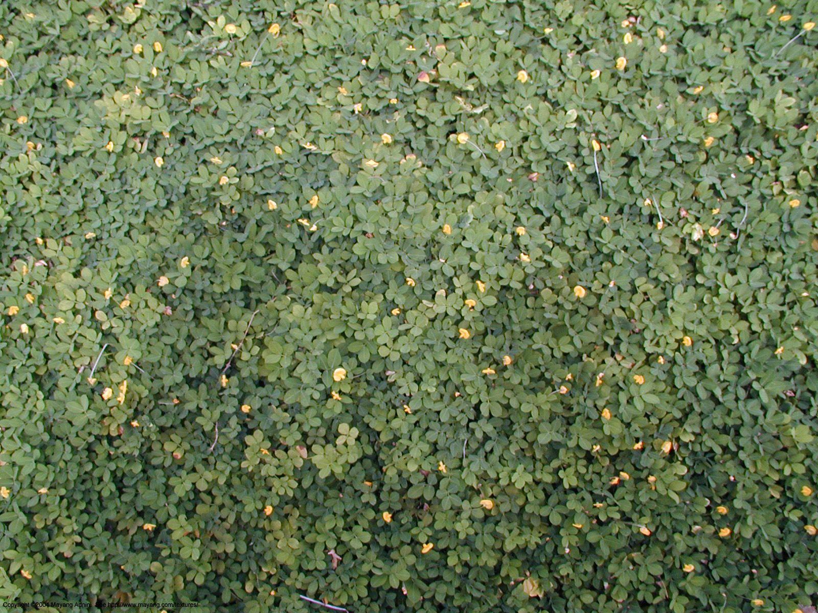 Mayang s Textures Plants Repetitive Plants Textures