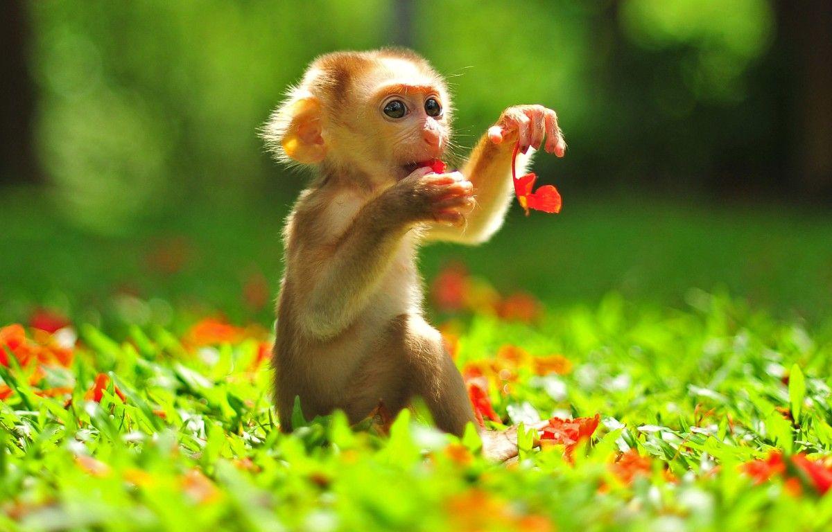 Картинки с животными красивые и смешные на телефон