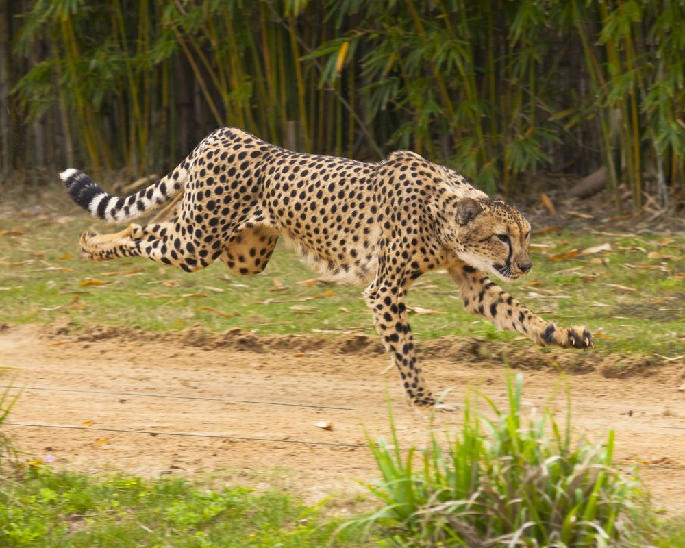 9d525a720be1cbad8b1fc7c25012dfbe - Run For The Fund Busch Gardens
