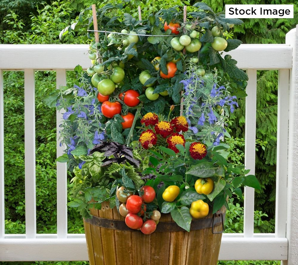 Perk Up Your Patio And Palate With This 5 In 1 Vegetable Garden