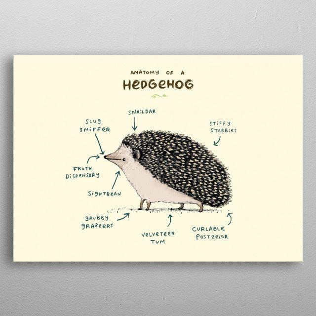Anatomy of a Hedgehog by Sophie Corrigan | metal posters - Displate | Displate thumbnail