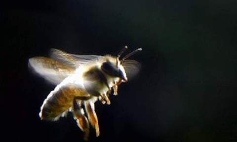 Blamed for Bee Collapse, Monsanto Buys Leading Bee Research Firm