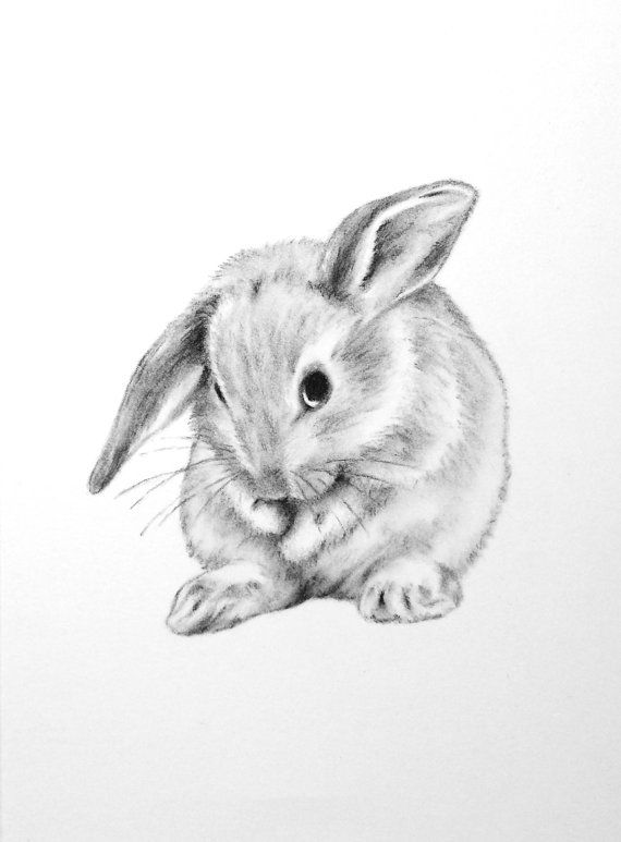mini lop coloring pages | Pin by Tecia Tecia on Bunnies in 2019 | Bunny drawing ...