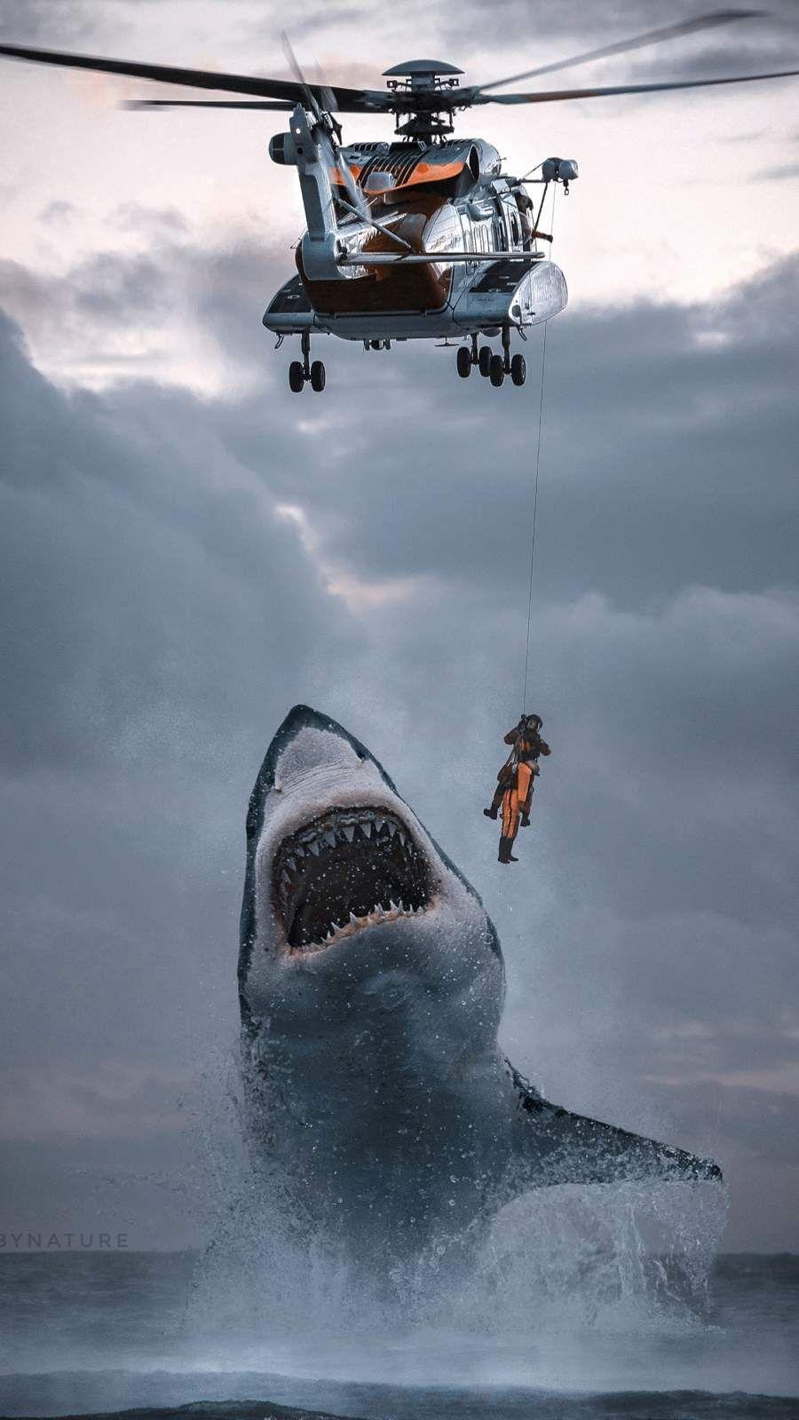 Coast Guard Shark Attack iPhone Wallpaper Shark