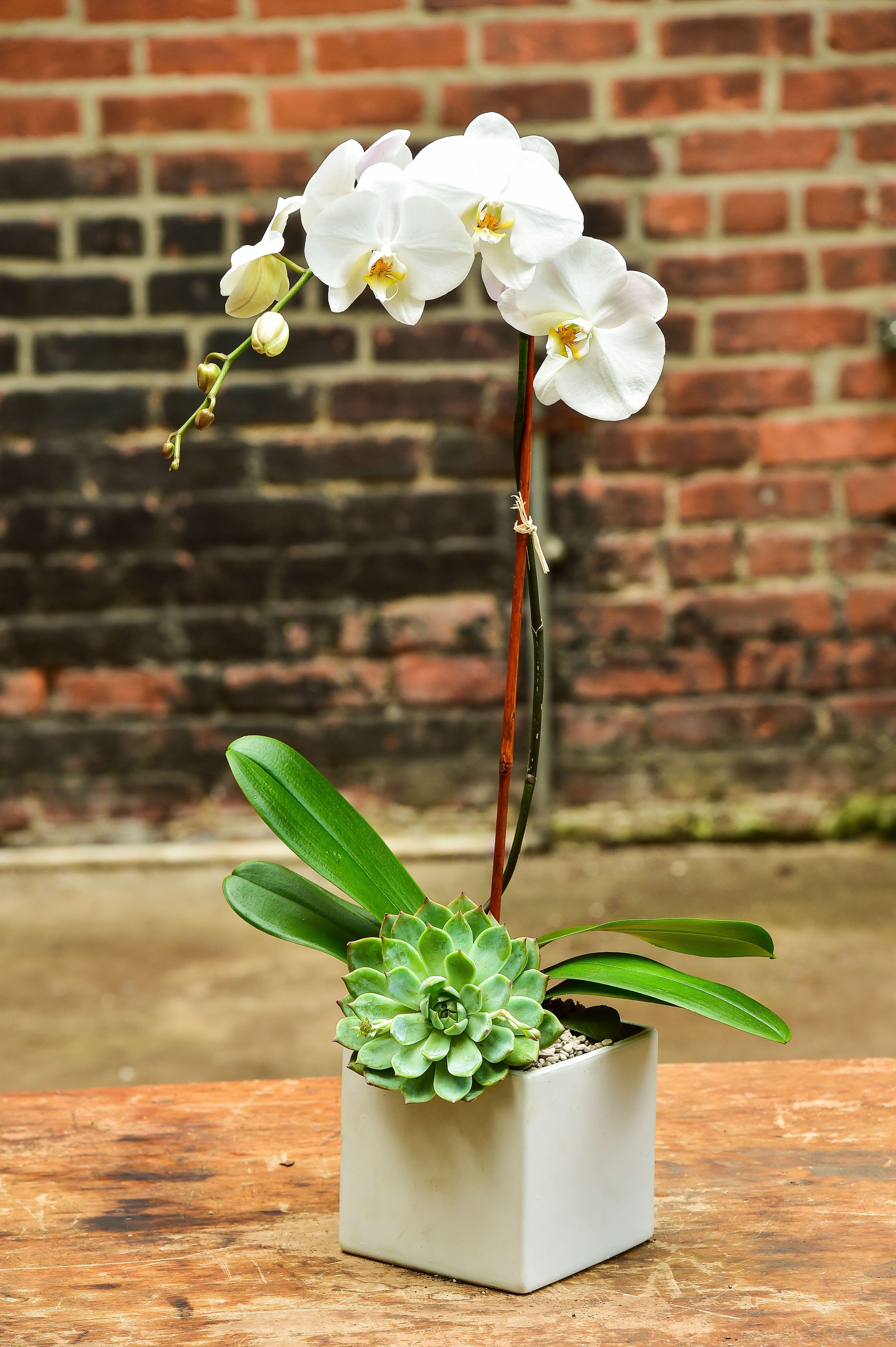 Single Succulent Orchid Arrangements Orchids Succulent Arrangements