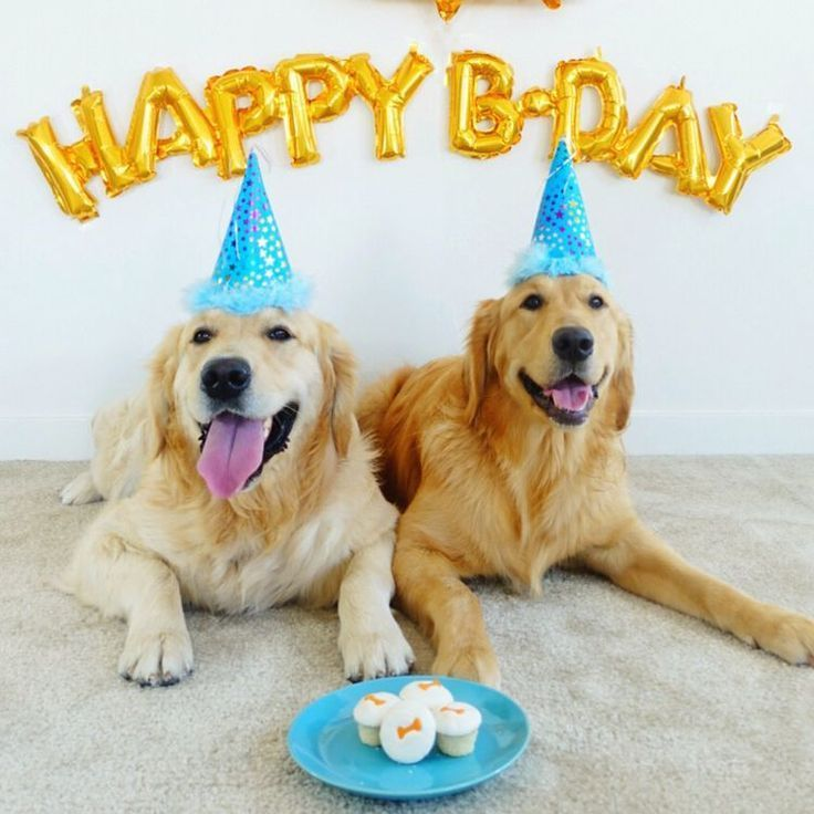 Discover 10 ways to celebrate your dogs birthday in 2020