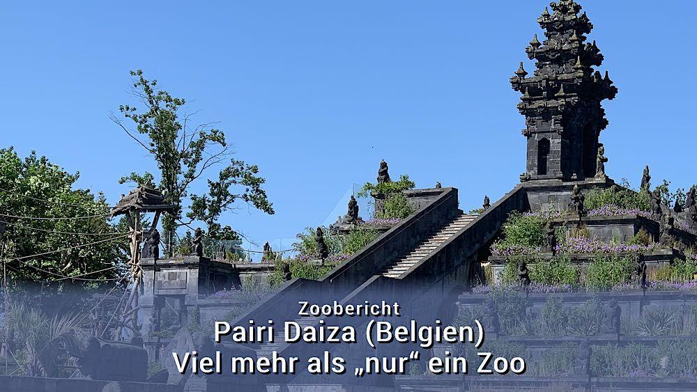 Pairi Daiza Mehr Als Ein Zoo In Belgien Zoo Belgien Botanischer Garten