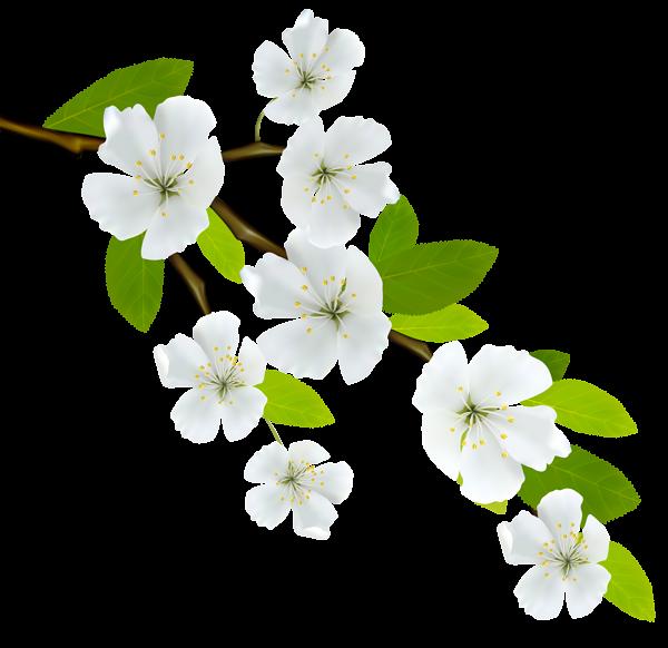 Afbeeldingsresultaat voor png branch   plant png ...