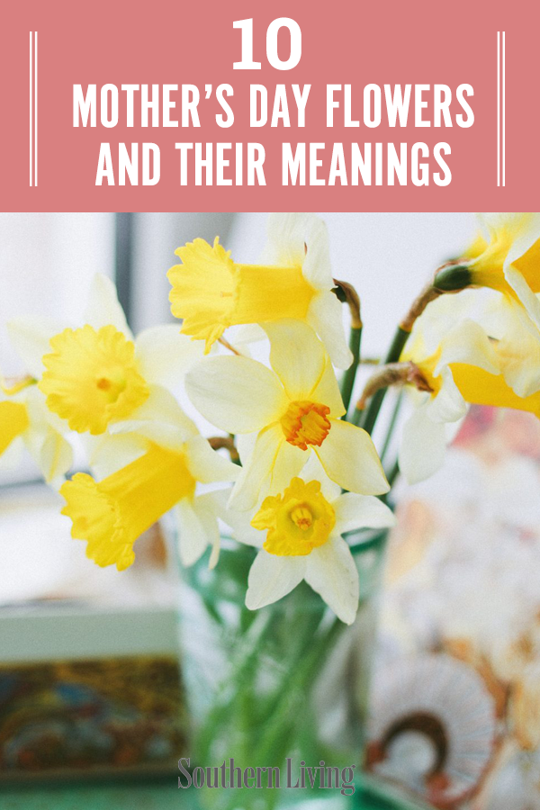 Mother S Day Flowers And Their Meanings In 2020 Flower Meanings Mothers Day Flowers Popular Flowers